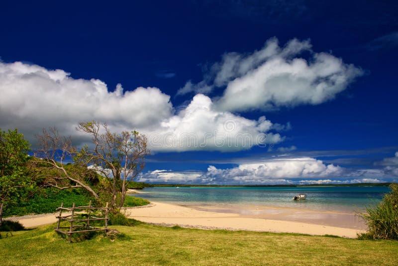 Wyspa sosny zdjęcia royalty free