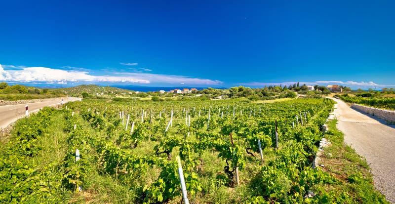 Wyspa Vis winniców panorama zdjęcia stock