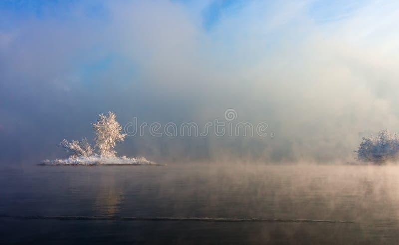 Wyspa z drzewami po środku wody, zakrywającej mgłą fotografia royalty free