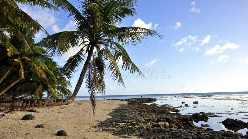 Wyspy drzewko palmowe zdjęcia stock