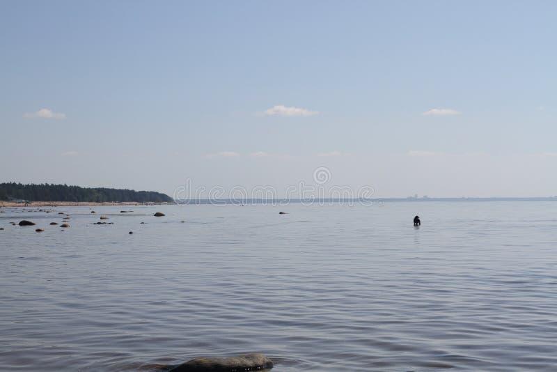 wyspy duńskiej jezior krajobrazowej charakteru Wadden mały przypływu morza wilder wody Powierzchnia jeziorna lawina Wsi natury pi fotografia stock
