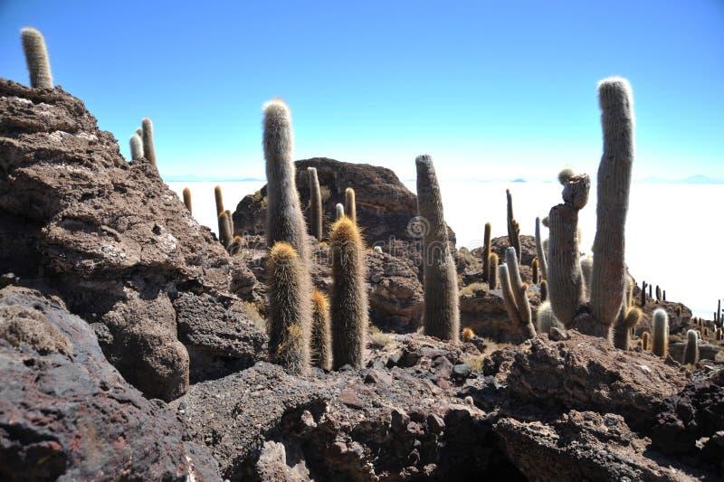 Wyspy inka Wasi - kaktusowa wyspa fotografia stock
