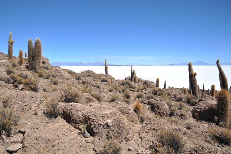 Wyspy inka Wasi - kaktusowa wyspa obraz royalty free