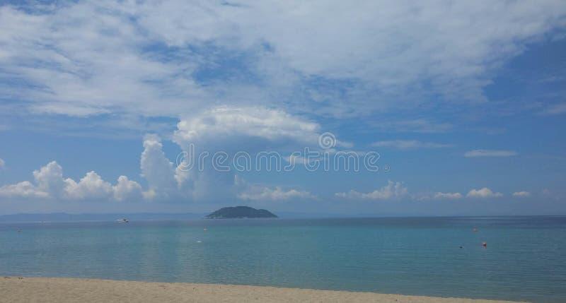wyspy linię brzegową kokosowy żółwia washedup zdjęcie royalty free