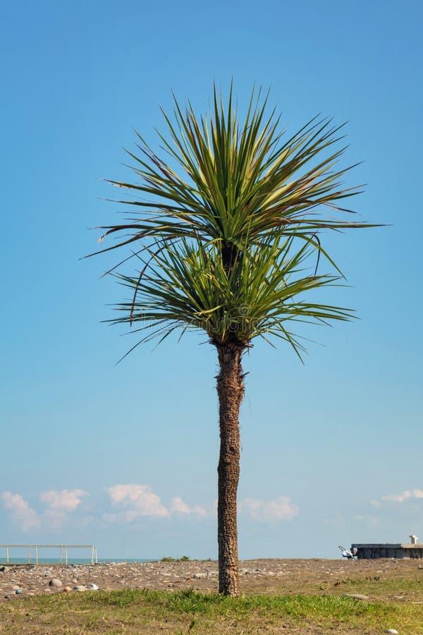 wyspy pla?owej raju palm drzewo obrazy stock