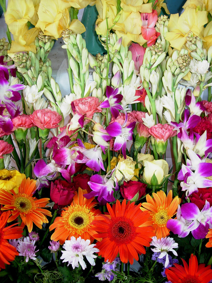 wystawa kwiatów świeże fotografia stock
