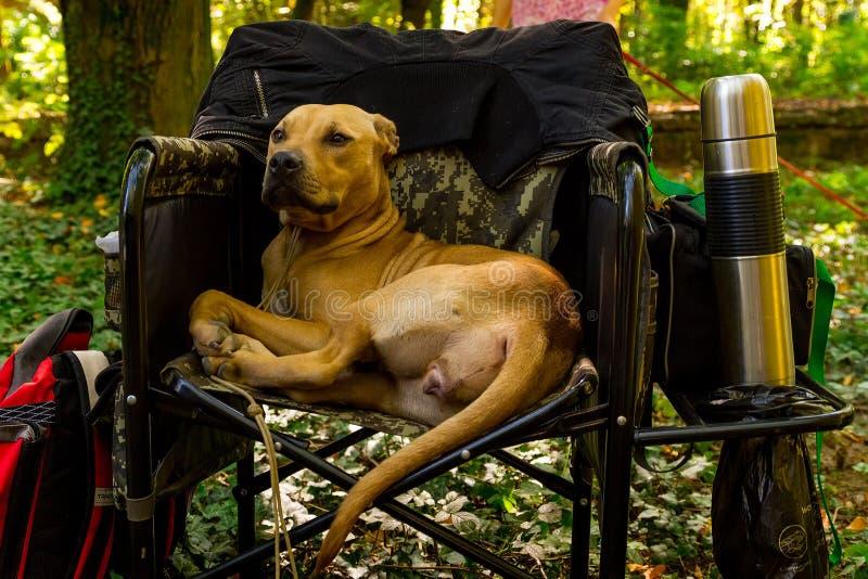 Wystawa psy wszystkie trakeny fotografia royalty free