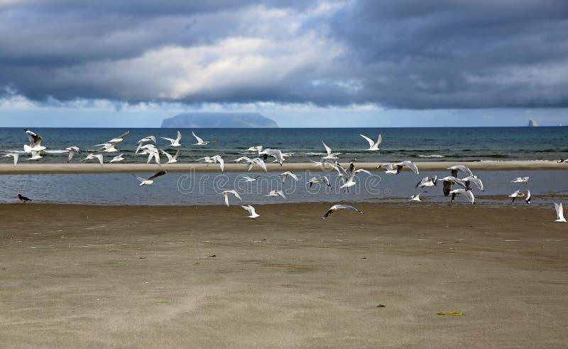 Wystawiam rachunek seagulls latać zdjęcia royalty free
