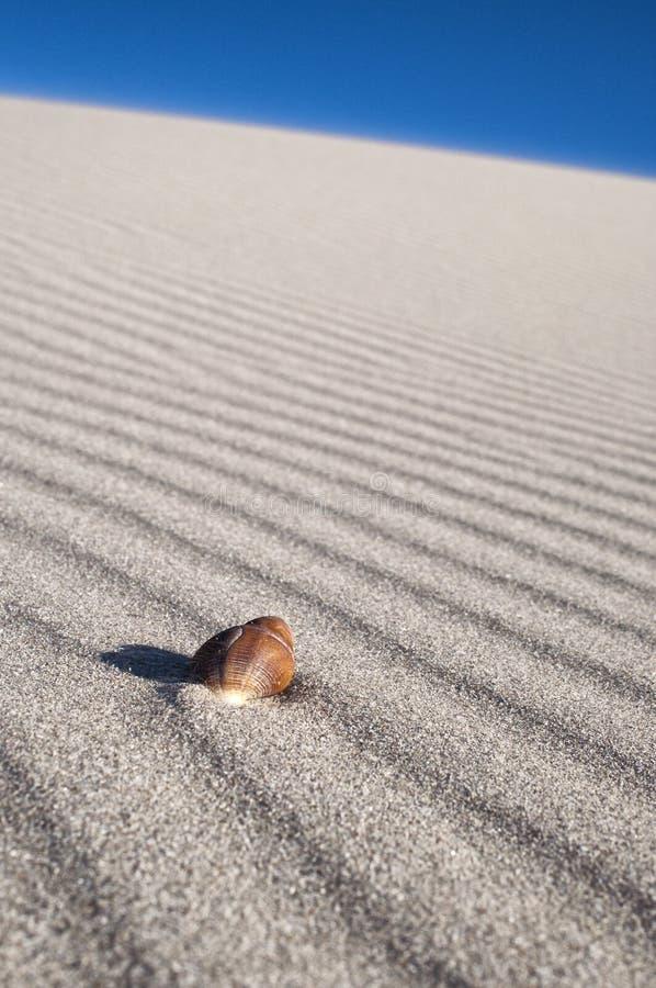 wystrzelone linie piaska denny skorupy wiatr fotografia royalty free