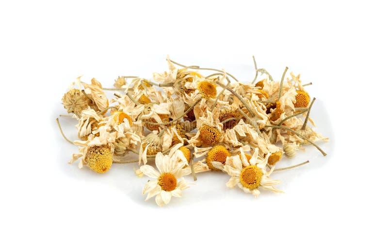 Wysuszeni chamomile kwiaty odizolowywający obraz stock