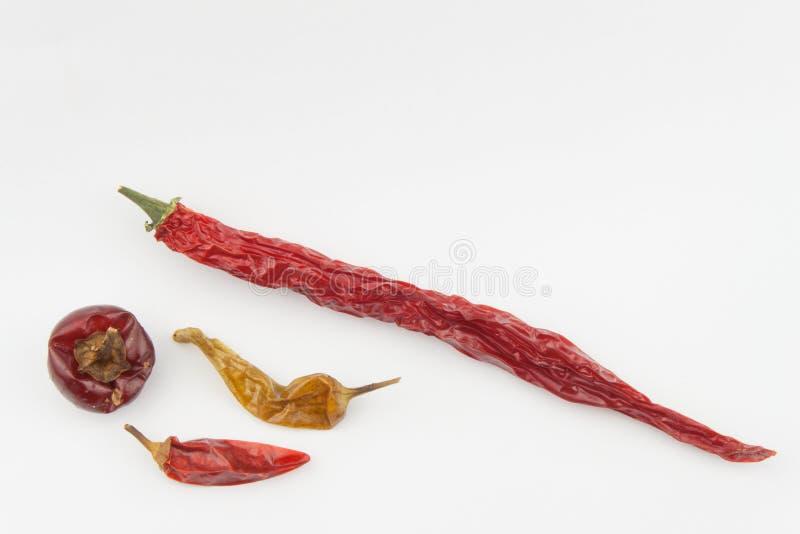 Wysuszeni chili pieprze na białym tle Silne pikantność zdjęcie stock