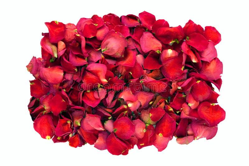 Wysuszeni czerwieni róży płatki obraz stock