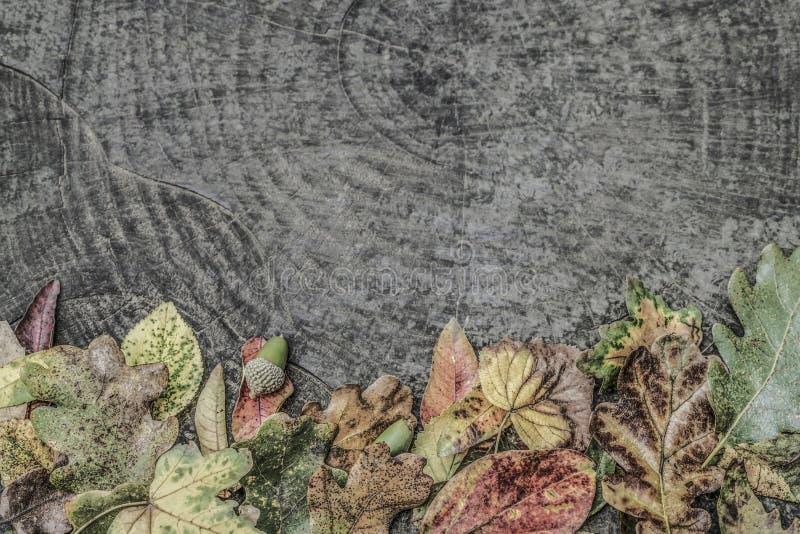 Wysuszeni jesień liście i acorns na drewnianym tle zdjęcie stock
