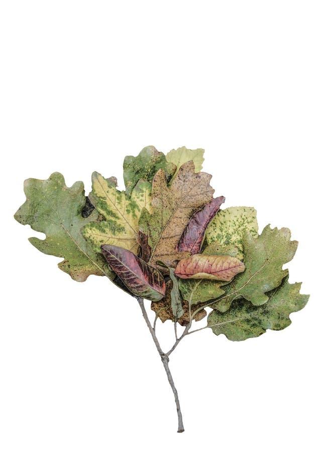 Wysuszeni jesień liście jak drzewny kształt na drewnianym tle obraz royalty free