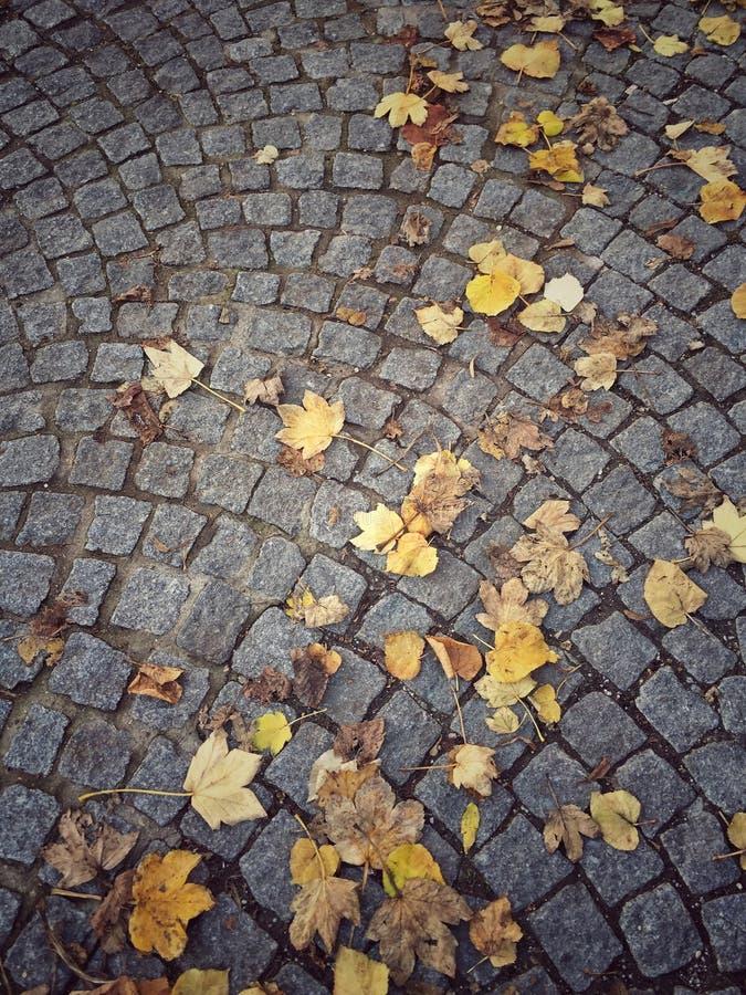 Wysuszeni jesień liście na ziemi zdjęcie royalty free