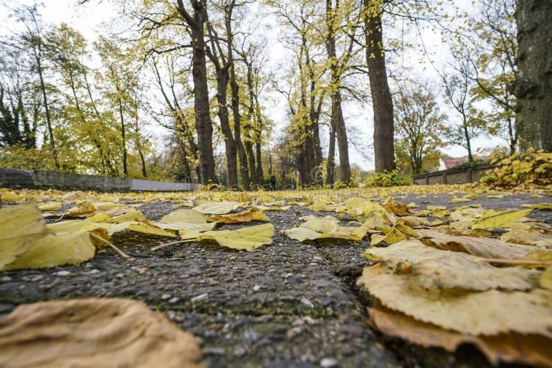 Wysuszeni jesień liście na ziemi przy parkiem zdjęcie stock