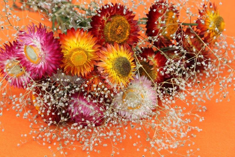 wysuszeni kwiaty zdjęcie stock