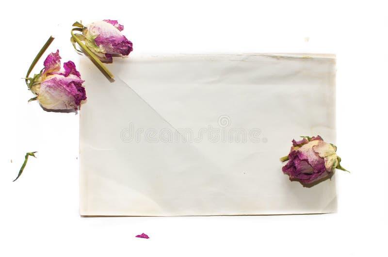 Wysuszeni kwiaty i papier obrazy royalty free