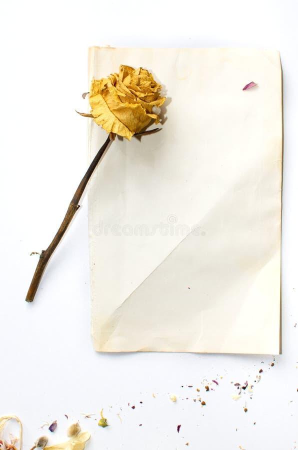 Wysuszeni kwiaty i papier obraz royalty free