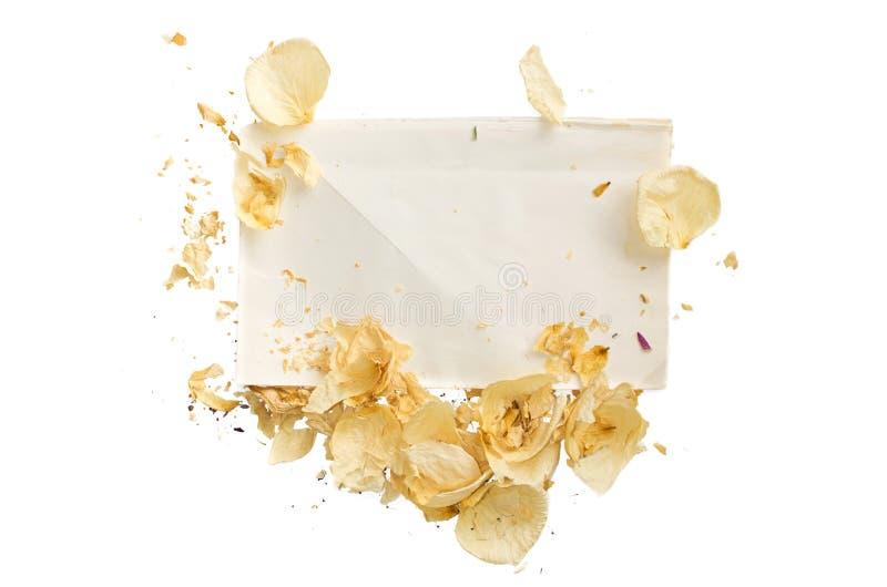 Wysuszeni kwiaty kłama - odizolowywa zdjęcie royalty free
