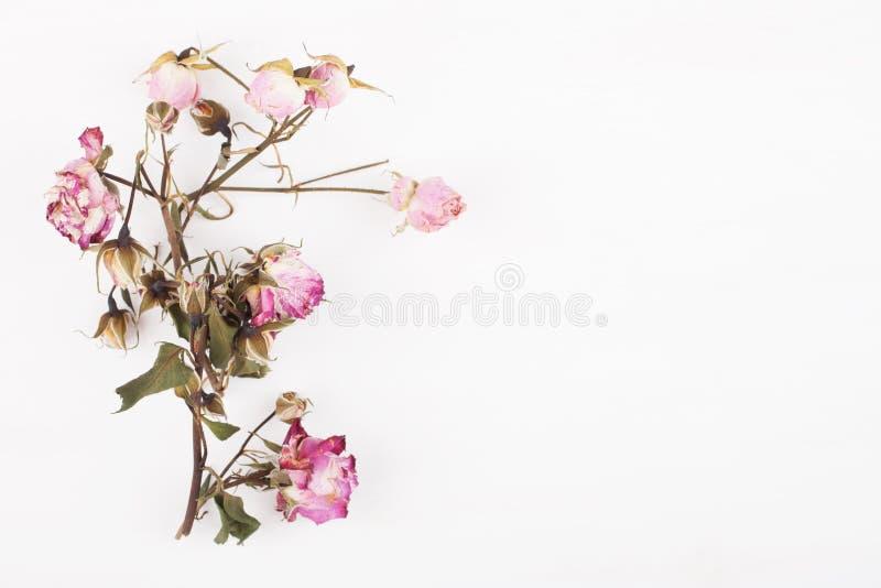 Wysuszeni kwiaty na białym drewnianej deski tle Odg?rny widok obraz stock