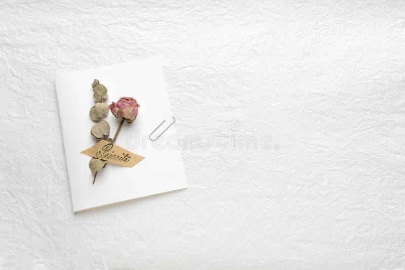 Wysuszeni kwiaty róże na białym papierze Menchie yellow fotografia stock