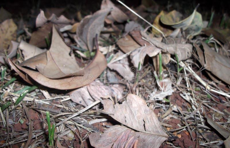 Wysuszeni liście na ziemi obrazy stock