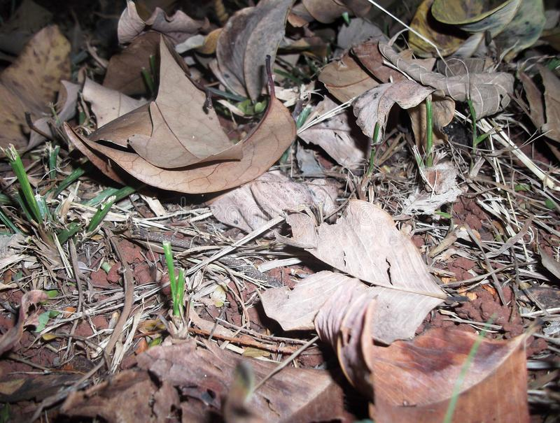 Wysuszeni liście na ziemi zdjęcie stock