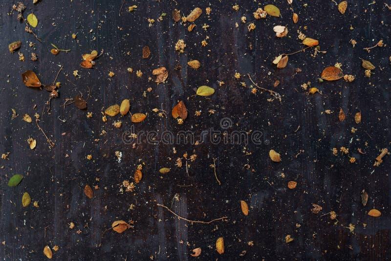 Wysuszeni liście rozpraszali na ciemnym drewnianym stołowym wierzchołku obraz royalty free