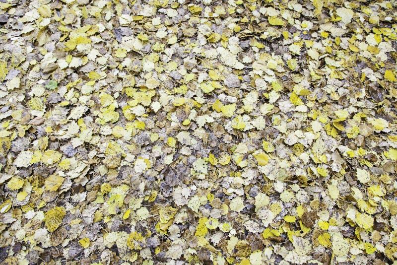 Wysuszeni liście w jesieni zdjęcia stock