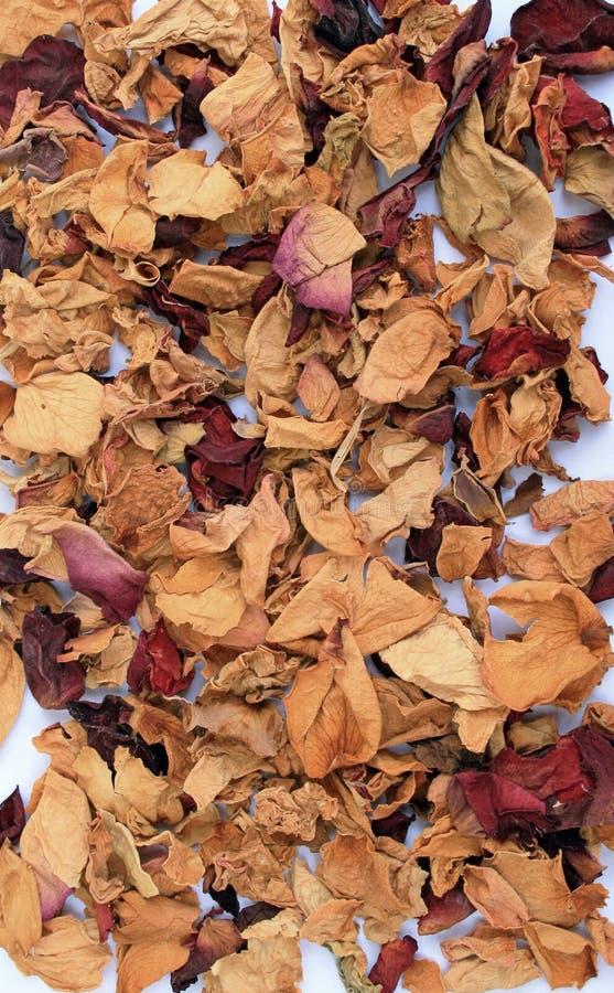 Wysuszeni Różani płatki zdjęcie stock