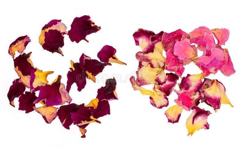 Wysuszeni Różani płatki Kwiat herbata obrazy stock