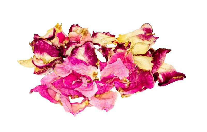 Wysuszeni Różani płatki Kwiat herbata obraz stock