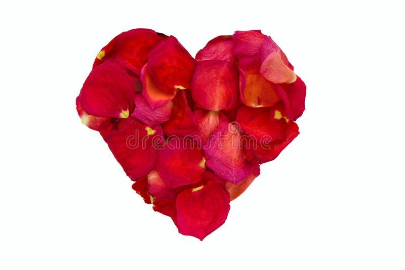 Wysuszeni różani płatki w kierowym kształcie. zdjęcia stock