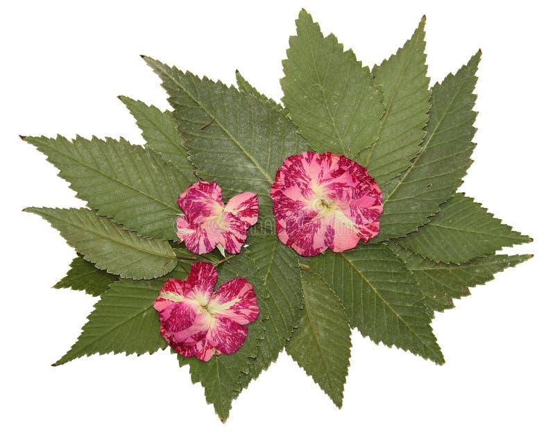 Wysuszeni spadków liście rośliny, kwiaty i gałąź, odosobniony elem obraz stock