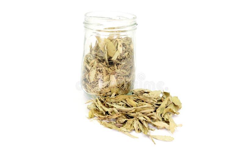 Wysuszeni Stevia Stevia rebaudiana Bertoni liście nalewający z szklanego słoju odizolowywającego na białym tle zdjęcia royalty free