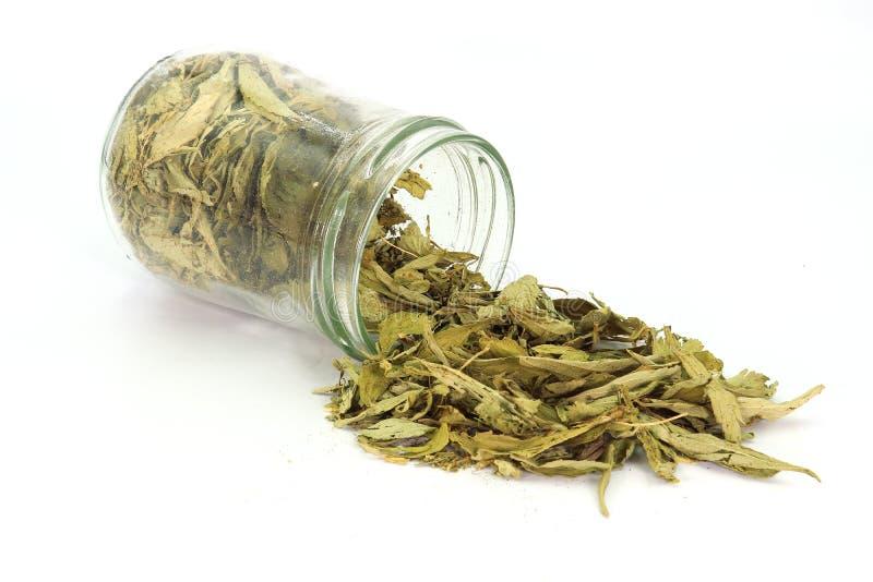 Wysuszeni Stevia Stevia rebaudiana Bertoni liście nalewający z szklanego słoju odizolowywającego na białym tle obraz royalty free