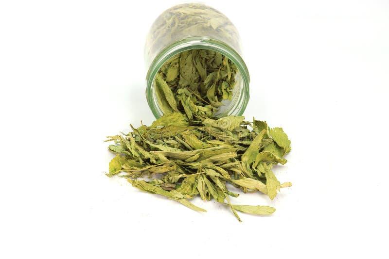 Wysuszeni Stevia Stevia rebaudiana Bertoni liście nalewający z szklanego słoju odizolowywającego na białym tle zdjęcia stock
