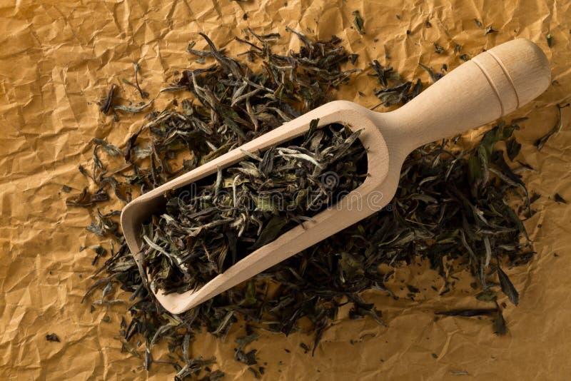 Wysuszeni, surowi biali herbaciani liście w drewnianej miarce nad brązu kocowania papieru tła odgórnego widoku mieszkaniem, kłaść zdjęcie royalty free