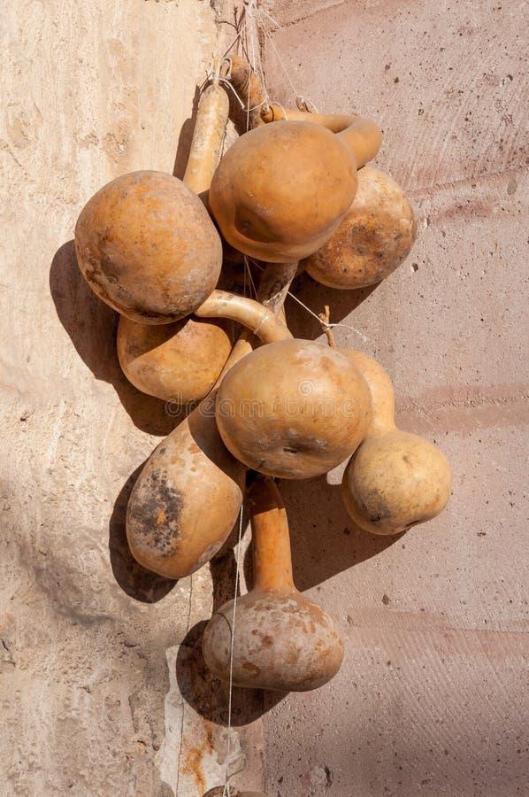 Wysuszona butelki gurda na ścianie w Goreme Cappadocia, kalabasy gurda, Kwitnął gurdy, Biały kwitnący gurdy Lagenaria obraz stock