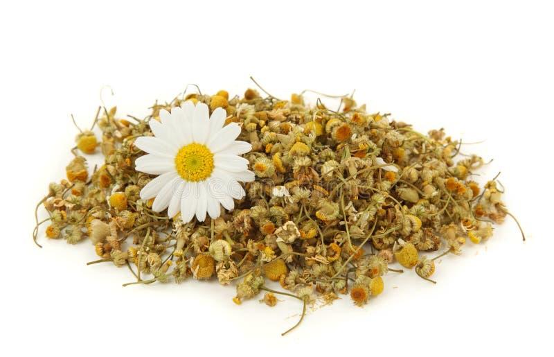 wysuszona chamomile herbata zdjęcia royalty free