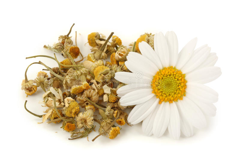 wysuszona chamomile herbata obraz royalty free