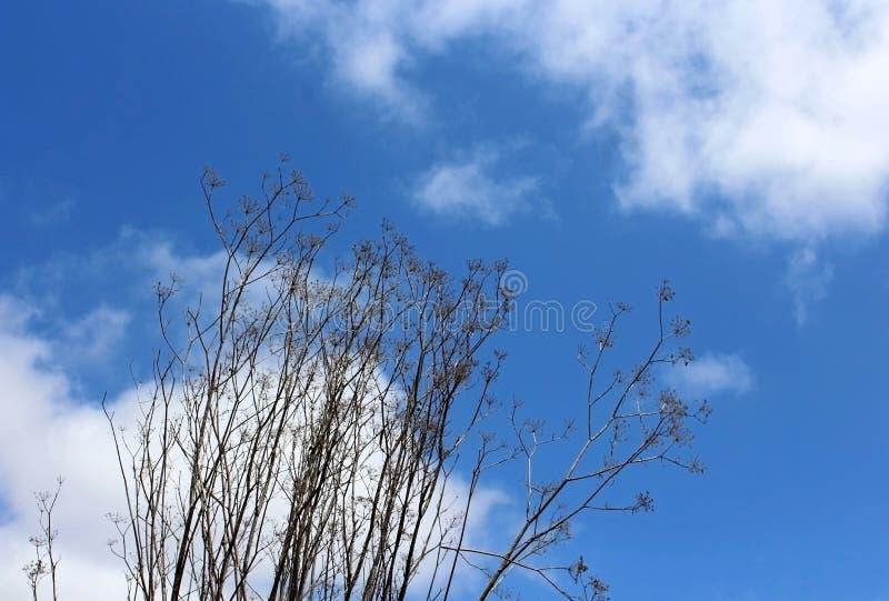 Wysuszona królowej Anne ` s koronka pod niebieskim niebem zdjęcie royalty free