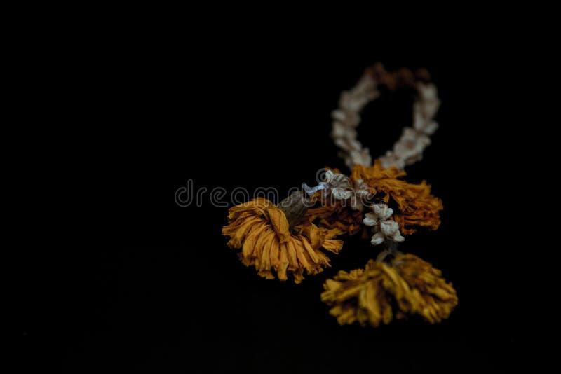 Wysuszona kwiat girlanda zdjęcie stock