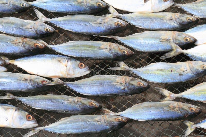 Wysuszona makrela obrazy royalty free