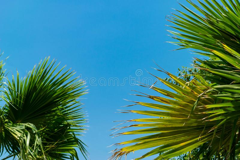 Wysuszona palma opuszcza przeciw jasnemu niebu pod światłem słonecznym obraz stock