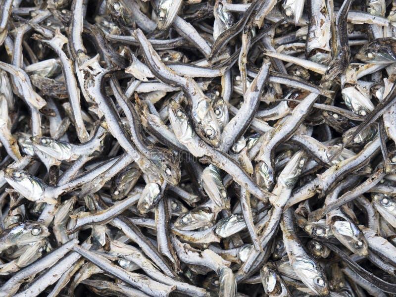 Wysuszona ryba, Japonia fotografia stock