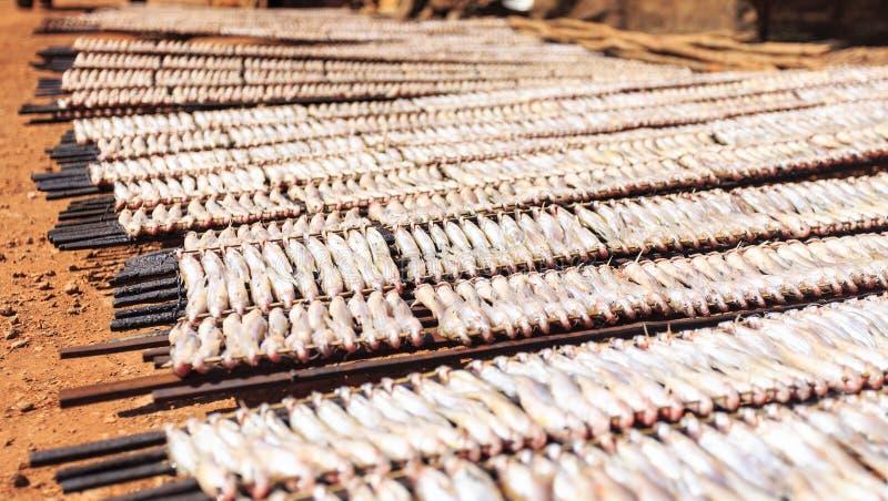 Wysuszona ryba w Południowo-wschodni Asia zdjęcie royalty free