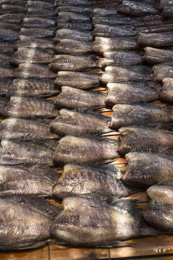 Wysuszona solona damsel ryba, Najwięcej popularnej Tajlandzkiej kuchni obraz royalty free