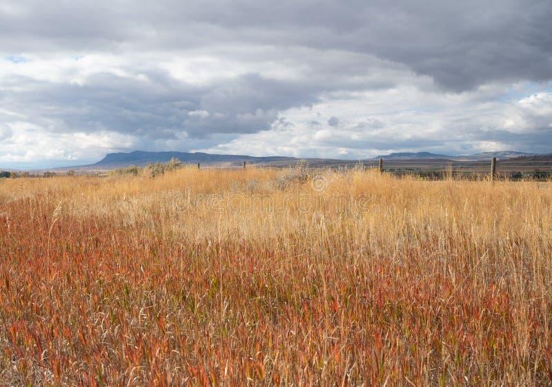 Wysuszona trawa w polu z burz chmurami Zasięrzutnymi fotografia royalty free